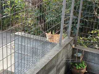 猫の写真・画像素材[361385]