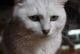 猫の写真・画像素材[530751]