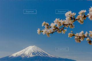 No.574471 桜