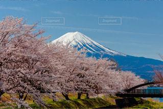 No.574472 桜