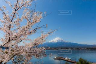 No.574473 桜
