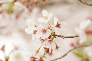 花の写真・画像素材[429091]