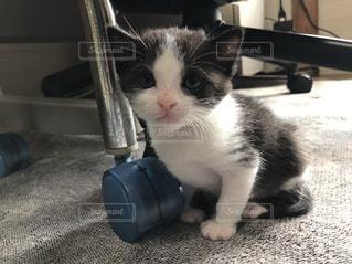 猫 - No.486996