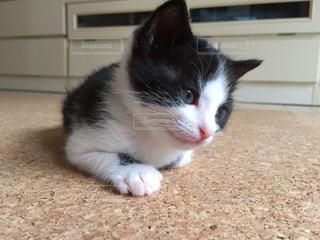 猫の写真・画像素材[504516]