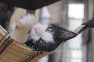 猫の写真・画像素材[670394]