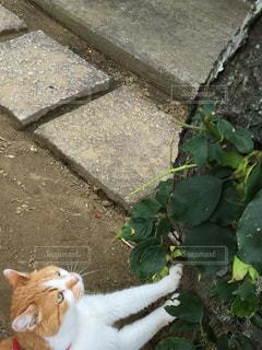 No.361874 猫