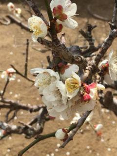 花の写真・画像素材[362909]