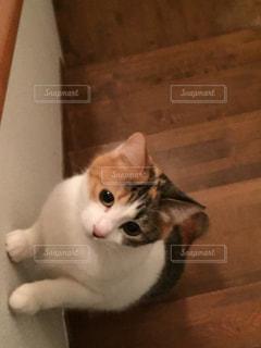 No.372476 猫