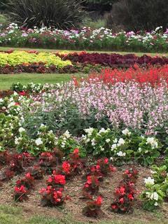 花々に囲まれての写真・画像素材[770212]