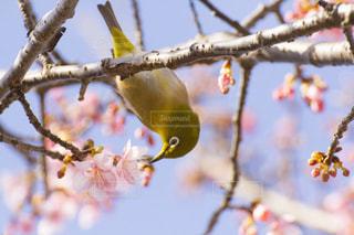 春 - No.361897