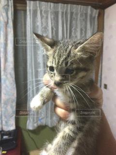 猫の写真・画像素材[367673]