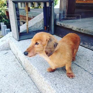 No.362793 犬