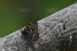 地面に蝶々がいるの写真・画像素材[2088652]