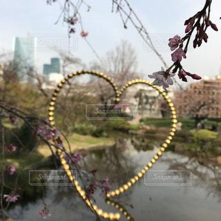 花の写真・画像素材[487635]