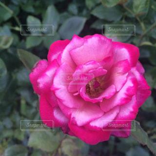 花の写真・画像素材[487674]