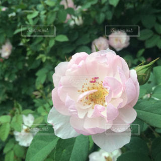 花の写真・画像素材[487676]