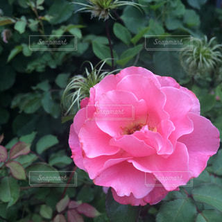 花の写真・画像素材[487696]