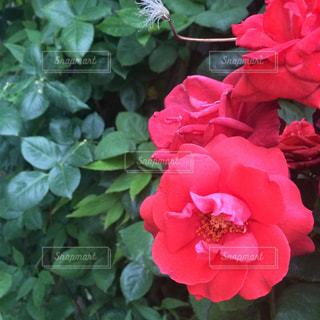 花の写真・画像素材[487697]