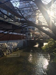 京都の写真・画像素材[487729]