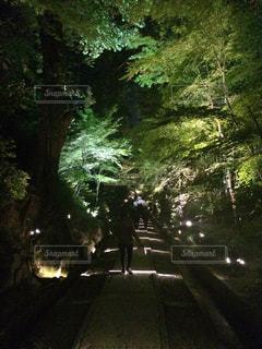 夜景の写真・画像素材[487743]