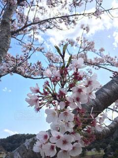 花の写真・画像素材[487759]
