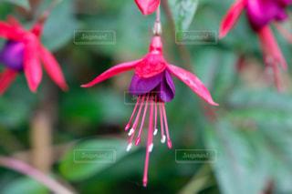 花の写真・画像素材[494502]
