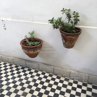 植物の写真・画像素材[362566]