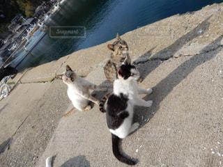 路上を歩く猫の写真・画像素材[1312110]