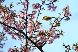 春 - No.392374