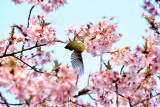 春 - No.392787