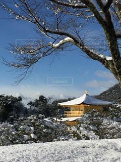冬の写真・画像素材[363667]