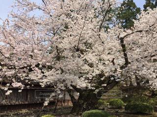 春の写真・画像素材[457981]
