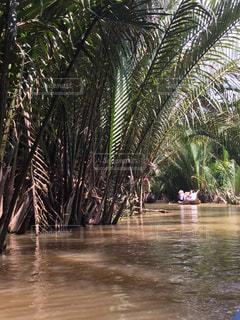水の体の横にあるヤシの木のグループの写真・画像素材[840875]