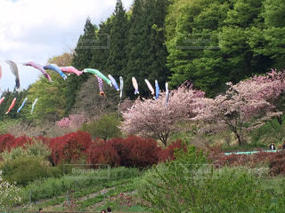 春の写真・画像素材[389633]
