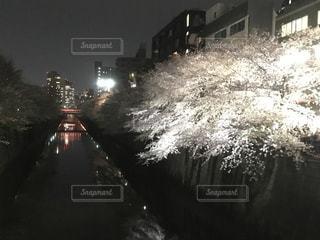 春の写真・画像素材[417620]