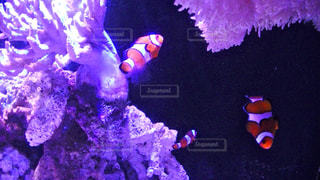No.385031 魚