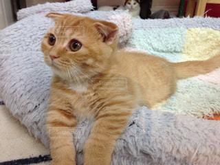 猫の写真・画像素材[460680]
