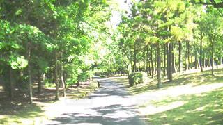 公園の写真・画像素材[510605]
