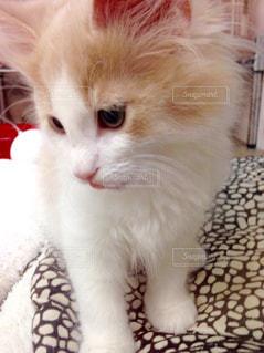 猫の写真・画像素材[531909]