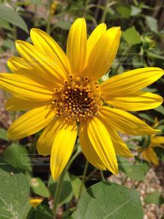花の写真・画像素材[585798]