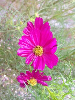 近くの花のアップ - No.744484