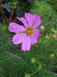 近くの花のアップの写真・画像素材[744499]