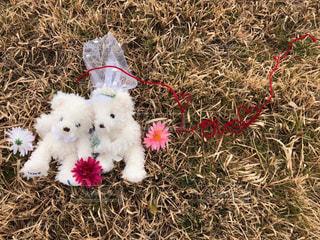 いくつかの草の上に横たわる白いテディベア - No.971022