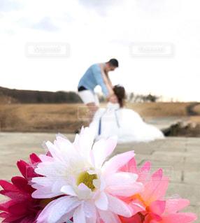 近くの花のアップの写真・画像素材[971045]