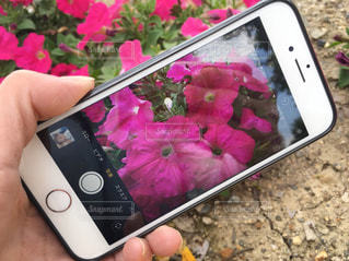 携帯電話を持っている人の写真・画像素材[1162429]