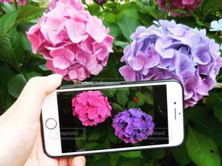 近くの花のアップの写真・画像素材[1267567]