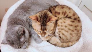 ベッドの上で眠っている猫の写真・画像素材[1290176]