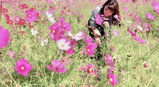 ピンクの花は草の中に立っています。の写真・画像素材[1566402]