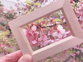 木製の箱の写真・画像素材[1866581]