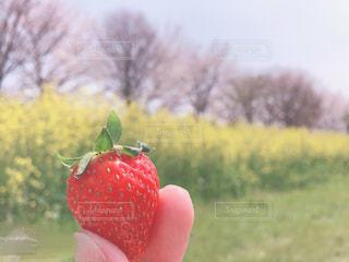 食べ物の写真・画像素材[2003297]
